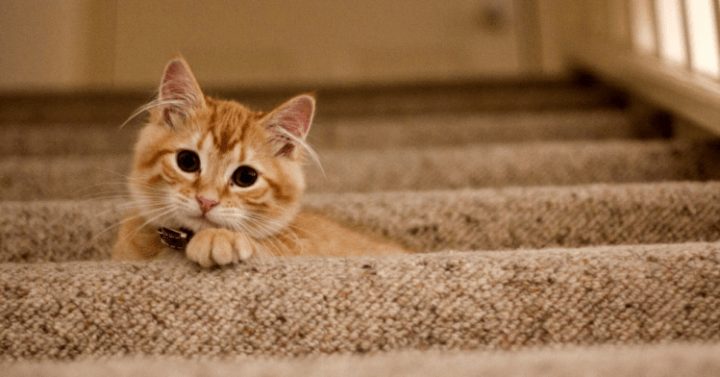A cute cat hiding at the stairs, being an obstacle for seniors